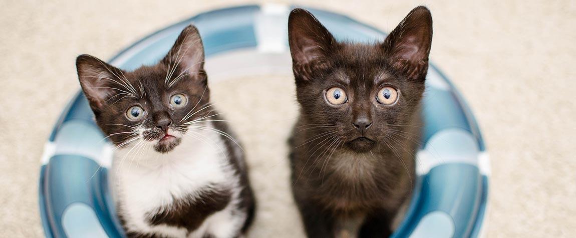 Hilf den Katzen in unserem Land mit einer Spende oder einem warmen Körbchen
